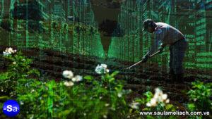 saul ameliach el mercado agropecuario se une a tecnología Big Data